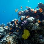 Сам риф прекрасен, требуется лишь руки протянуть