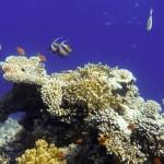 Синее море приятнее цианида