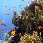 вертикальные рифы тоже интересны