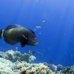 Самые красивые рыбы только в Египте