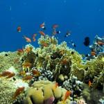 Ищите интересные узоры в рифах