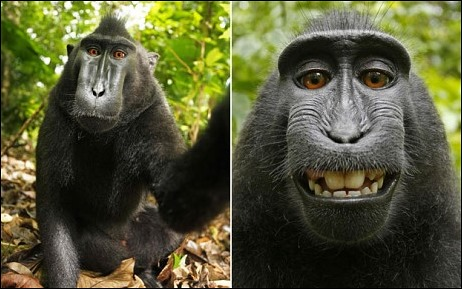 monkey-owns-the-copyright