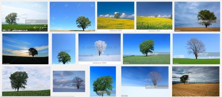 philosophy-tree