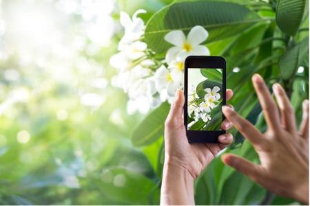 plantsnap определяет цветы по фотографии