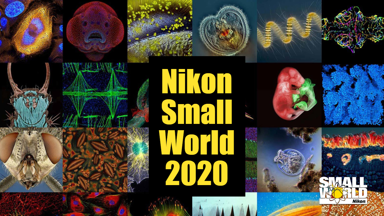 Nikon Small World 2020